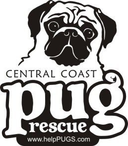 say woof pet photography photographs for central coast pug rescue